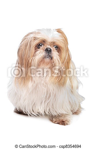 White Long Haired Small Dog Breeds