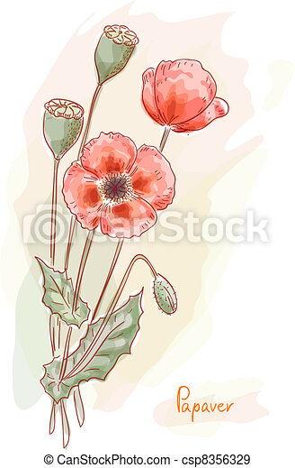 Red poppy (Papaver). Watercolor style. - csp8356329