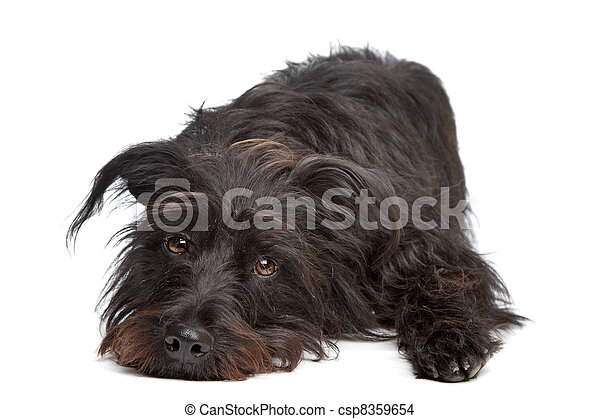 black mixed breed dog - csp8359654