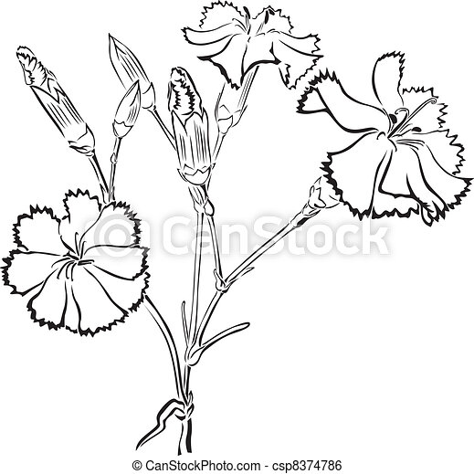 Les Black Carnations What Time Did You Say It Is In New York City