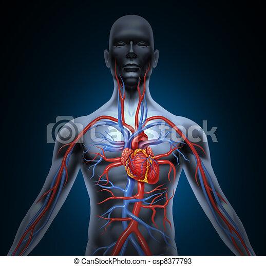 Human Heart Circulation - csp8377793