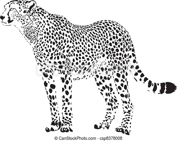 Gepard - Black and white cheetah - csp8378008