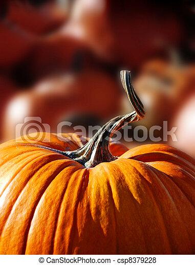 single pumpkin with vine growing through garden fence