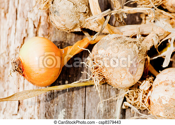 Biological garlics and onions - csp8379443