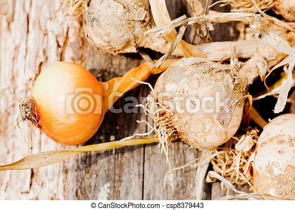Biological garlics and onions - csp8379443