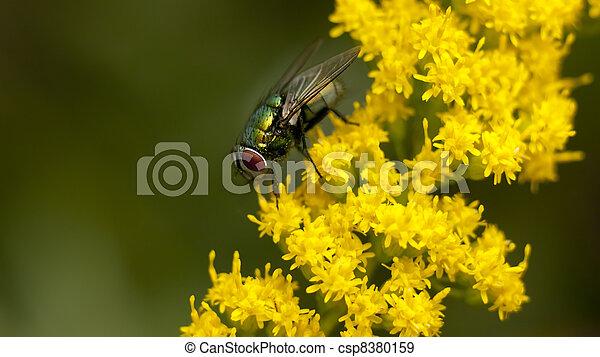 stock fotografien von gr n fliegen gelber blumen gr n fliegen gelandet csp8380159. Black Bedroom Furniture Sets. Home Design Ideas