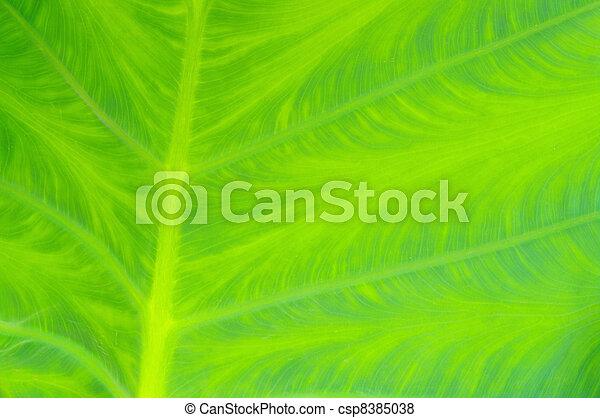 leaf vein 01 - csp8385038