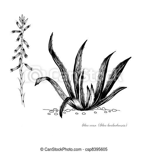 Aloe vera - csp8395605