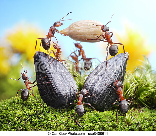 team of ants harvesting sunflower crop, agriculture teamwork - csp8408611