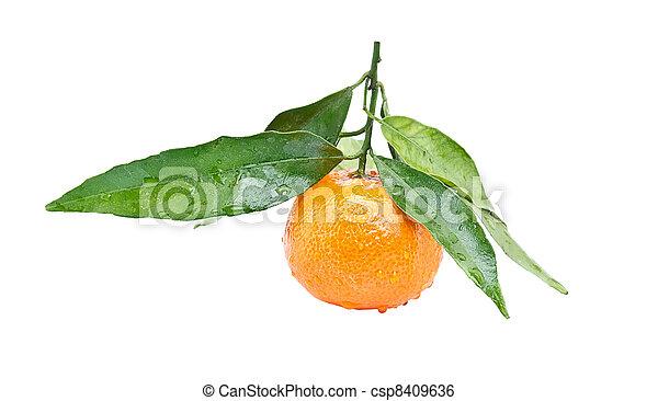 Clementine - csp8409636