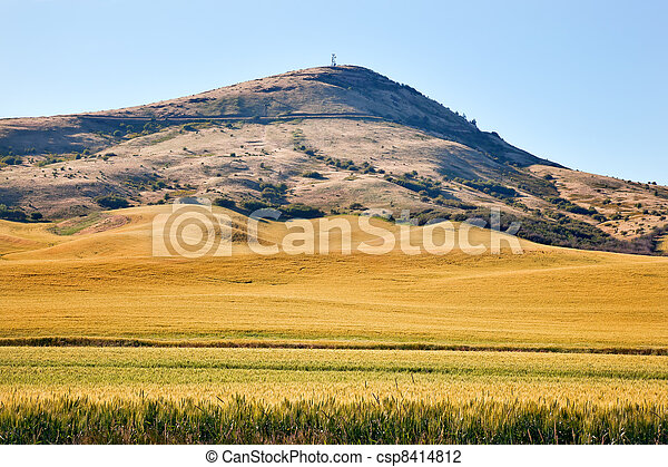 Steptoe Butte Yellow Green Wheat Grass Fields Blue Skies Palouse Washington State Pacific Northwest.  Steptoe Butte is the highest spot in the Palouse, Washington. - csp8414812