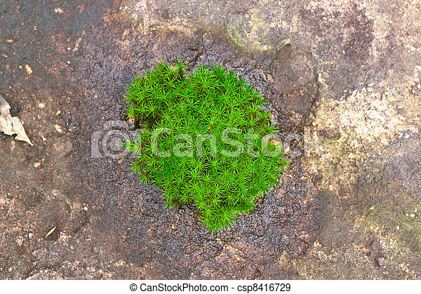 Existence of floral without soil ground - csp8416729