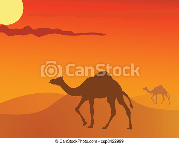 camel in the savanna - csp8422999