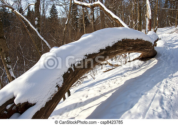 Broken tree trunk cover snow in winter and path - csp8423785