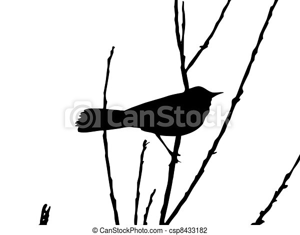 drawing bird on branch - csp8433182