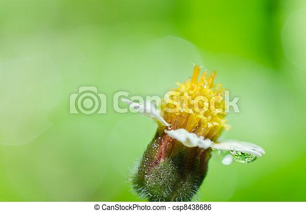 Image de jaune fleur mauvaise herbe vert nature mauvaise herbe csp8438686 recherchez - Mauvaise herbe fleur jaune ...