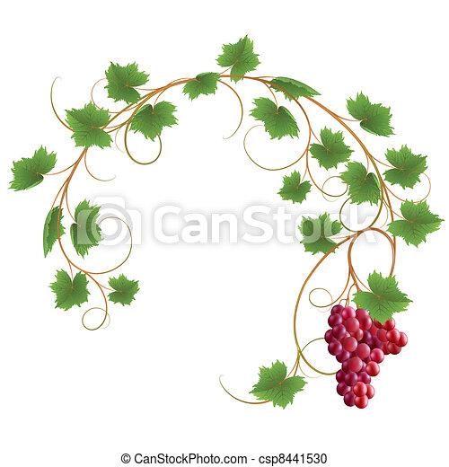 Vine - csp8441530