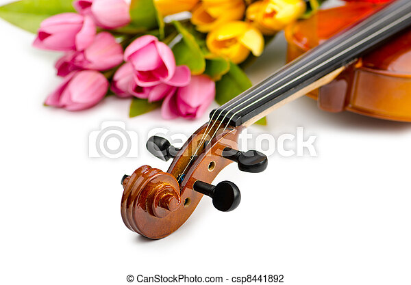 Violin and tulip flowers on white - csp8441892