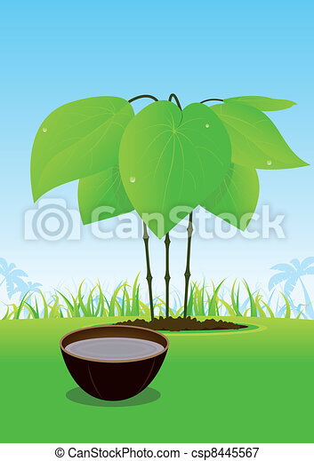 Kava Plant And Its Juice Served In Wood Bowl - csp8445567