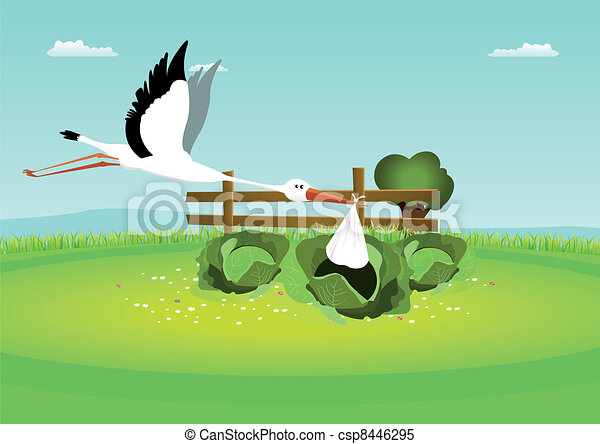 Stork Delivering Baby In Cabbage - csp8446295