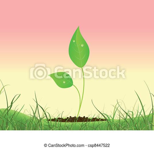 Spring Plant Growing In A Garden - csp8447522
