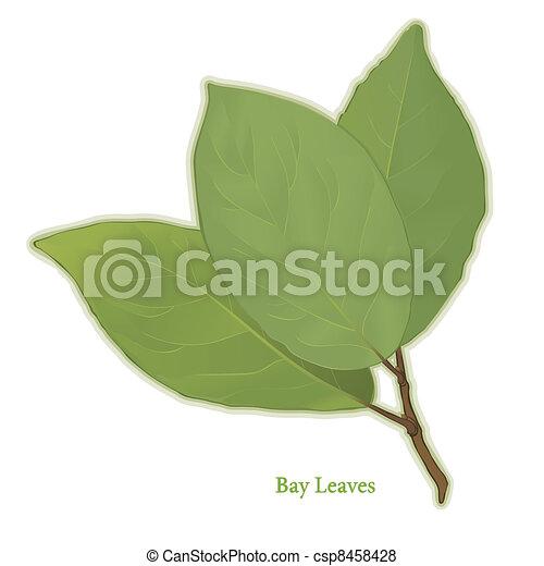 Bay Leaves Herb - csp8458428