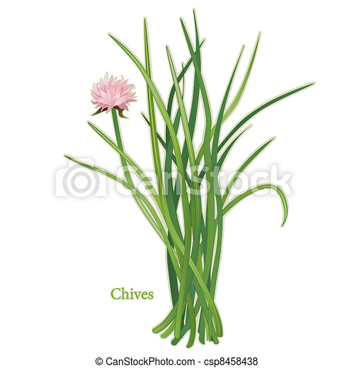 Chives Herb - csp8458438