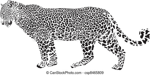 Leopard - Black and white vector illustration csp8465809 - Search Clip ...