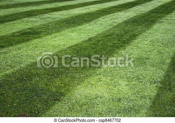 Stripy lawn - csp8467702