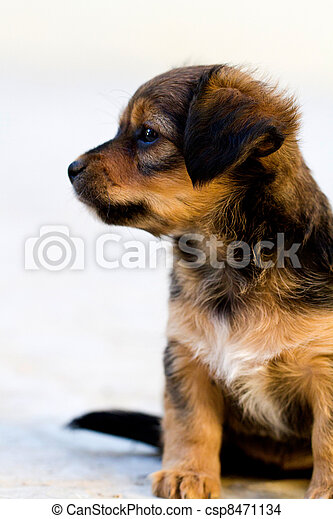 Close view of a young domestic dog on the street.