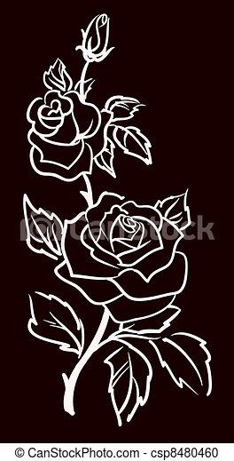 three white roses  isolated on black  background, vector illustration  - csp8480460