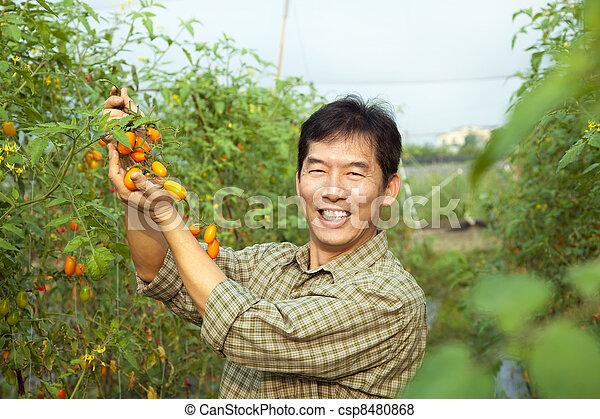 middle age asian farmer holding tomato on his farm - csp8480868