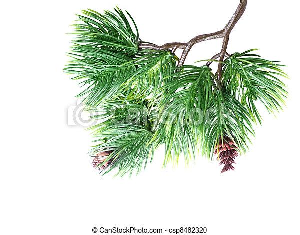 photographies de sapin fin arbre haut branche close haut de arbre csp8482320. Black Bedroom Furniture Sets. Home Design Ideas