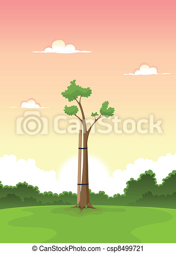 Spring Young Tree - Morning Of Life - csp8499721