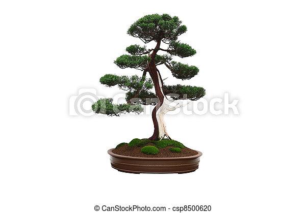stock fotografie von bonsai mini baum chinesisches. Black Bedroom Furniture Sets. Home Design Ideas