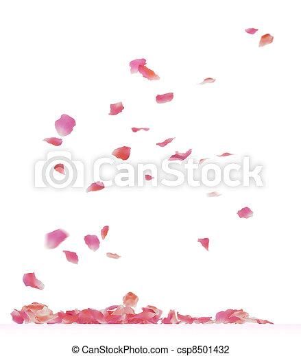 rose petals - csp8501432