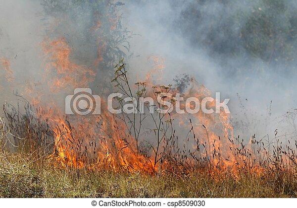 Bush Fire - csp8509030