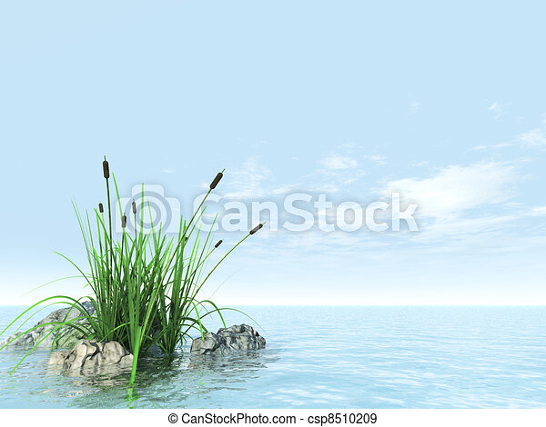 stones grasses and canes in an environment of water and sky - csp8510209