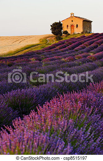 chapel with lavender and grain fields - csp8515197