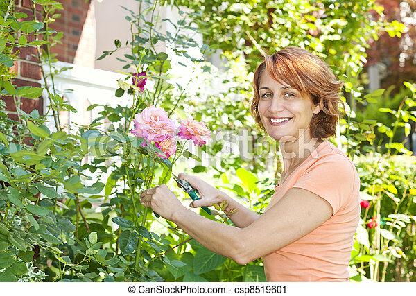 Woman pruning rose bush - csp8519601