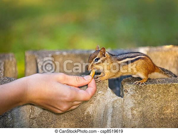 Feeding wildlife - csp8519619