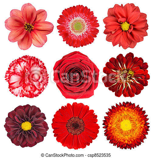 Selection of Red Flowers Isolated on White - csp8523535