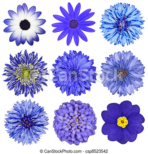 Various Blue Flowers Selection Isolated on White - csp8523542