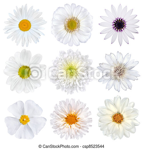Various Selection of White Flowers Isolated - csp8523544