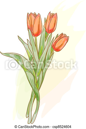 Bouquet of red tulips. Watercolor style.  - csp8524604