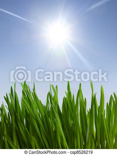 grass and sunlight - csp8526219
