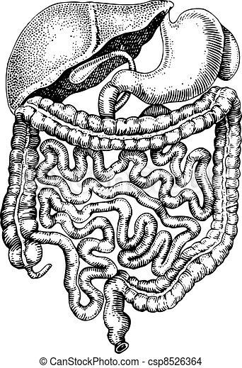 Internals of man - csp8526364