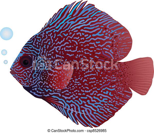 Discus Fish - csp8526985