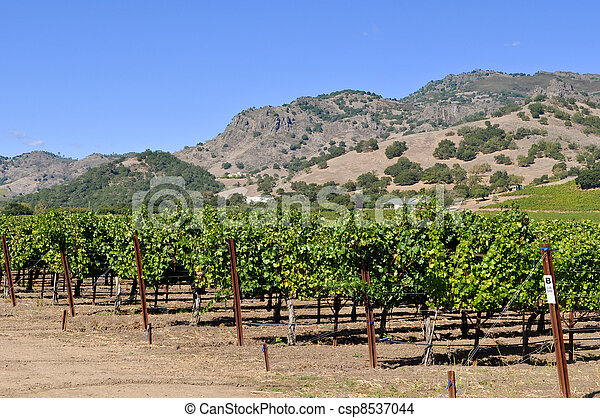 Napa Valley California Vineyard - csp8537044