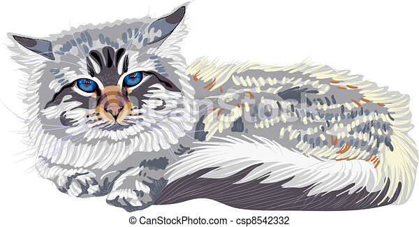 Close-up portrait, sketch a cat breed Siberian cat color-point (Neva Masquerade) with bright blue eyes.  - csp8542332